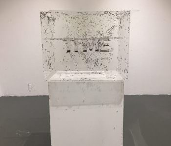Time Flies, by Emma Berliner, Jisoo Han, Xuanyi Lin, and Paul Wheatley
